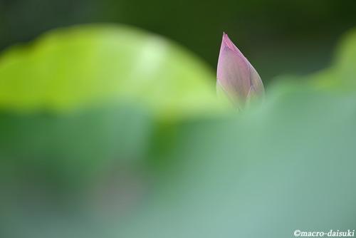 0814_140720_kyoto_441