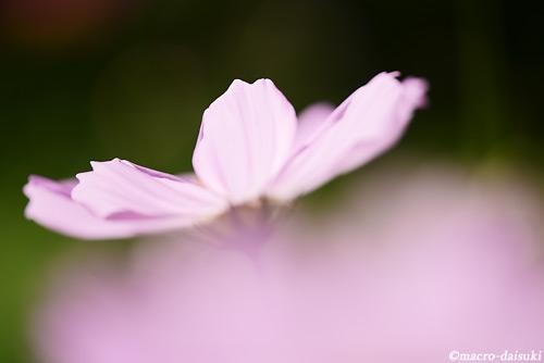 140921_kyoto_493