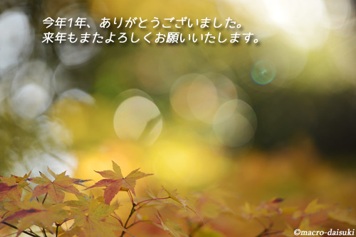 1231_141129_kyoto_666
