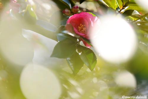 0120_150111_kyoto_152