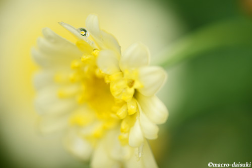 150301_kyoto_443