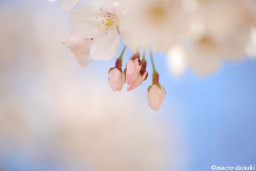 150404_settsu_322