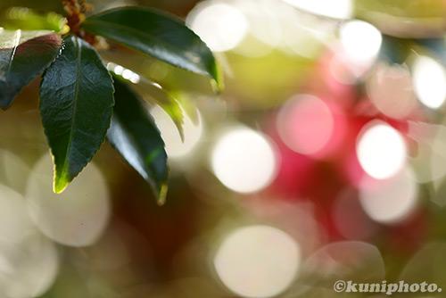 150111_kyoto_157