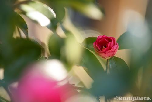 150111_kyoto_179