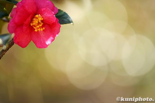 150111_kyoto_201