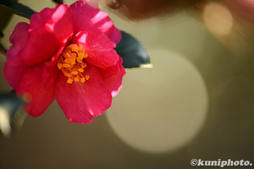 150111_kyoto_221