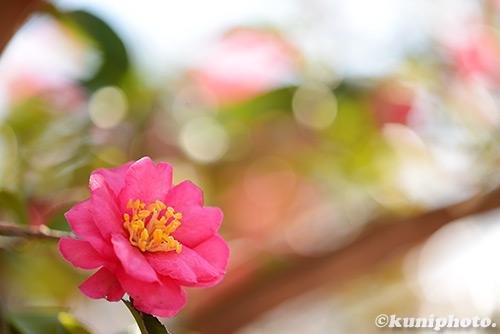 150111_kyoto_224