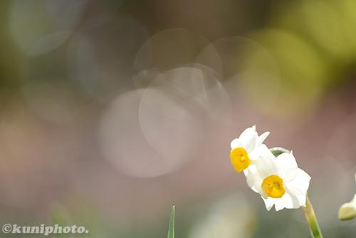 150118_hattori_050