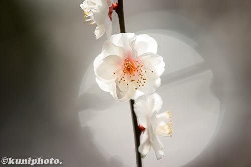 0216_160213_gyoen_176