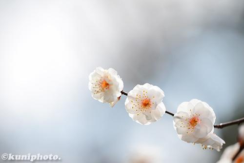 160213_gyoen_158
