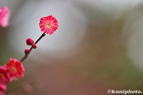 160213_gyoen_795