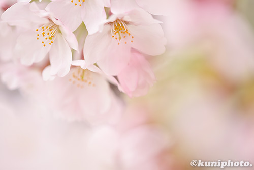 160402_kyoto_224