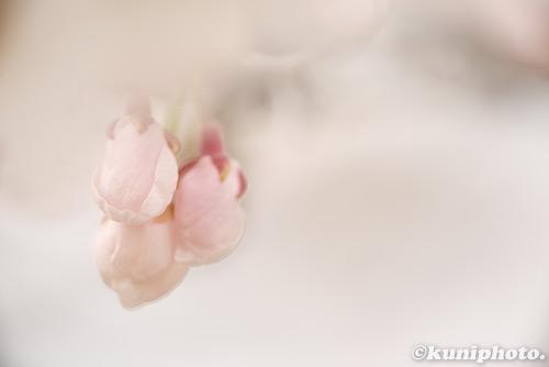 160403_tsurumi_438