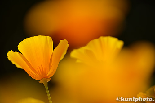 160505_kyoto_573