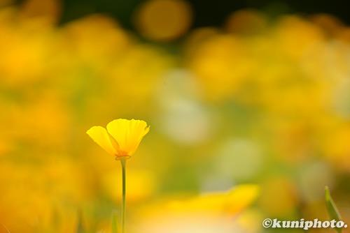 160505_kyoto_627