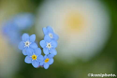 160505_kyoto_679