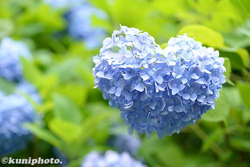 160611_hattori_331