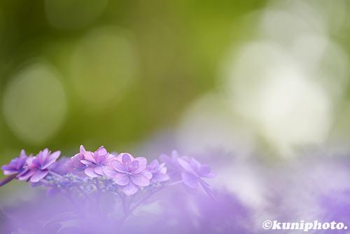 160604_maishima_355