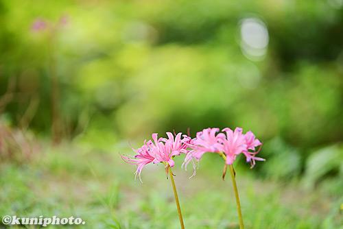 160911_hattori_123
