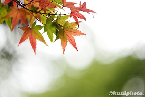 151122_gyoen_024