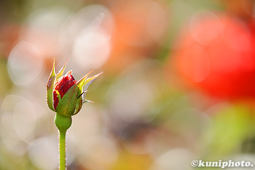 161029_aramaki_040