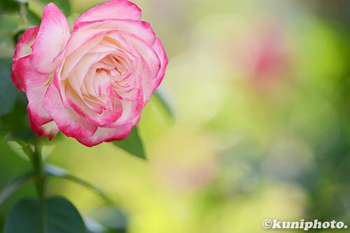 161029_aramaki_051