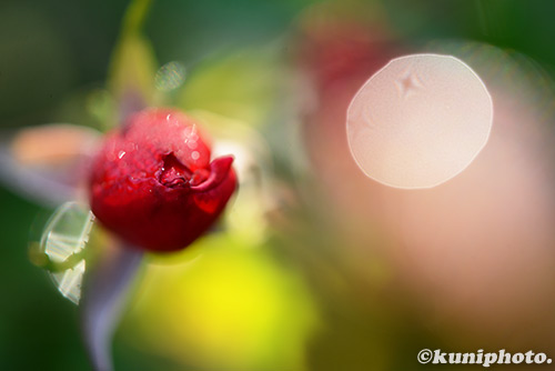161113_kyoto_032