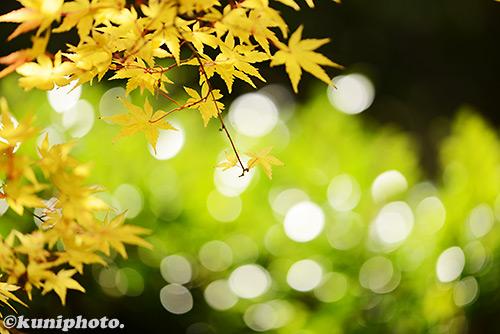 161113_kyoto_184