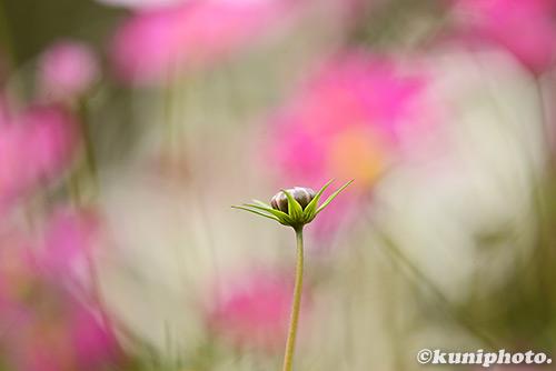 161113_kyoto_365