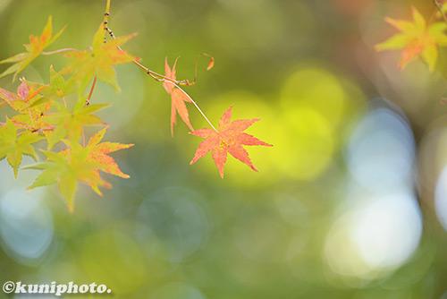 161126_tsurumi_195