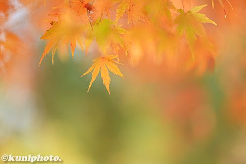 161126_tsurumi_294