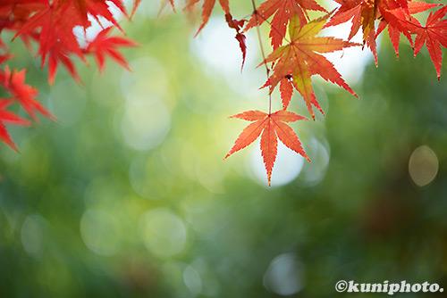 1225_161126_tsurumi_045