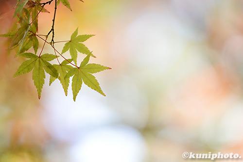 1230_161210_shimogamo_131
