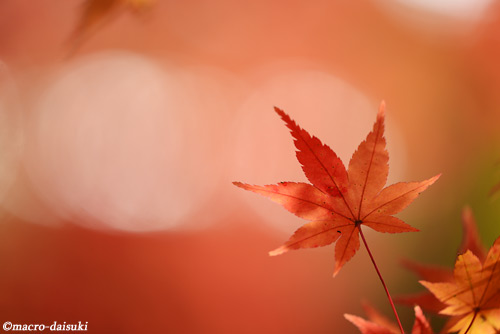 141129_kyoto_533