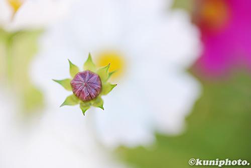 161112_kyoto_124
