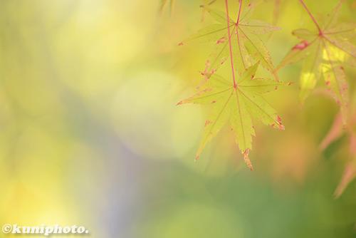 161126_tsurumi_015