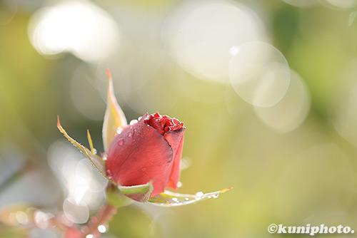170115_kyoto_265