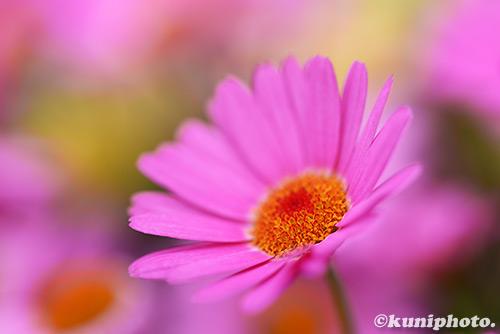 0311_170311_kyoto_400