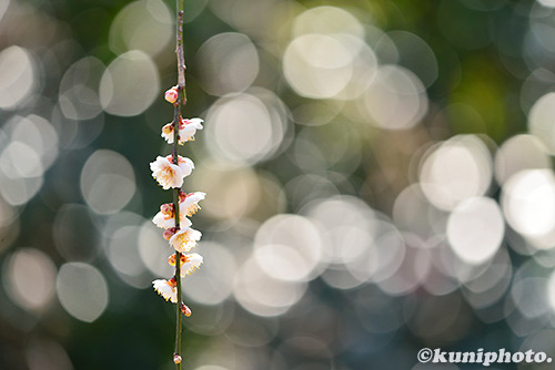 170311_kyoto_040