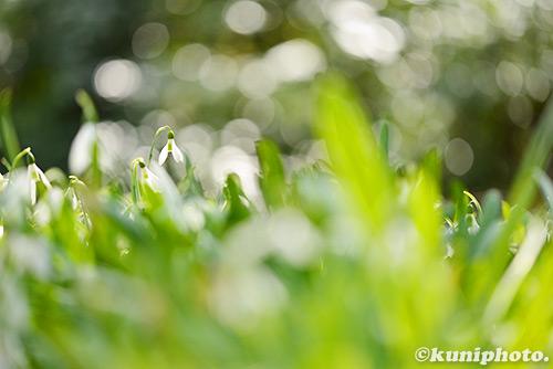 170311_kyoto_072