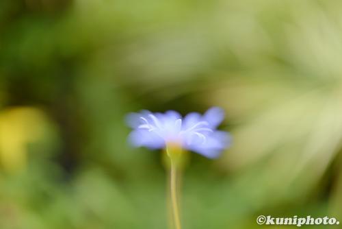 170314_kyoto_433