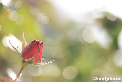 170115_kyoto_269