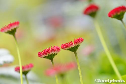 170314_kyoto_393