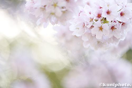 170413_kyoto_444