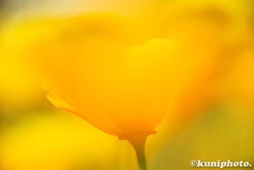0517_160505_kyoto_559