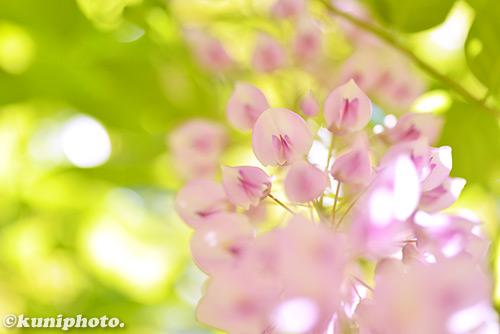 170508_manyo_191