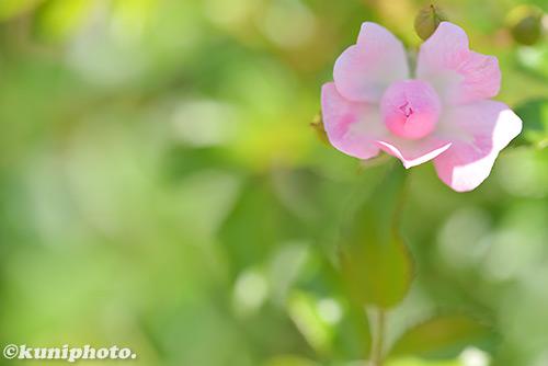 170522_nakanoshi_097_ザフェアリー