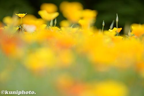 170611_kyoto_176