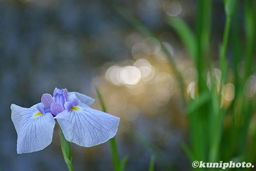 170614_hattori_116