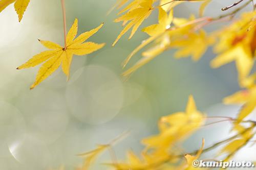 171128_kyoto_114_D5500